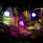 OCCC New Exhibit: Glow Forest